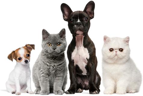 Корм для кошек 1st Choice купить в Нефтекамске. Фото и